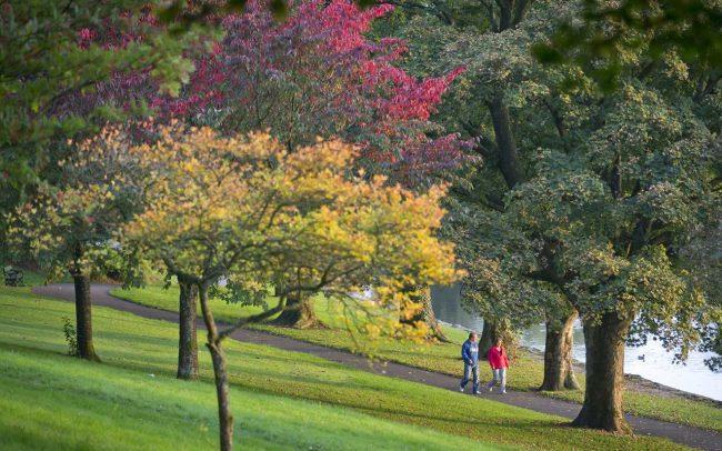 cyfartha park trees