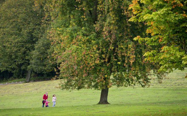 family walking in cyfartha park
